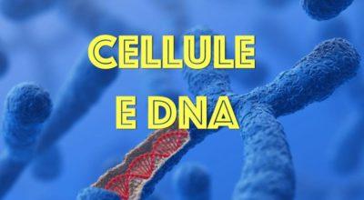 Cellule e DNA